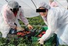 59 في المائة من النساء المغربيات العاملات توجدن بالبادية