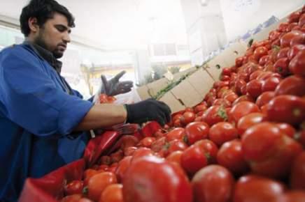 لهذا ارتفعت أسعار الطماطم ومواطنون يشتكون