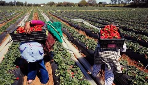 العنصر: الأمن الغذائي انشغال دائم لمختلف حكومات المغرب