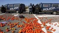 القدرة التنافسية للطماطم المغربية تزعج الاسبان