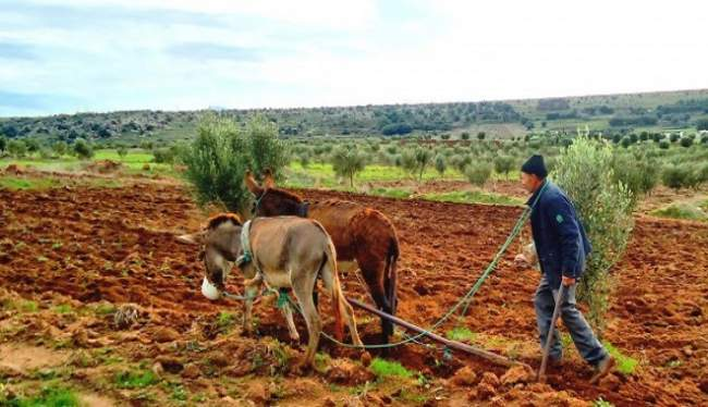 هل الموسم الفلاحي في المغرب يعيش خطر سنة جفاف؟