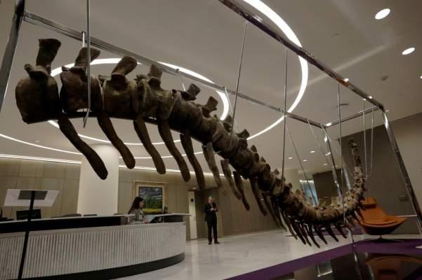من أجل المكسيك..بيع ذيل ديناصور عثر عليه في المغرب