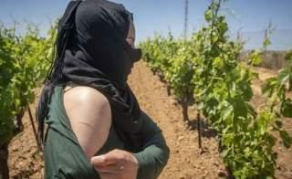 قضية عاملات الفراولة المغربيات تصلُ المحكمة العليا بإسبانيا