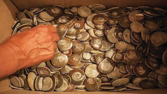 الحفريات النادرة تجارةٌ خفيةٌ في شرق المغرب