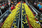 المغرب يسجل ارتفاعا في صادراته الغذائية نحو دول العالم