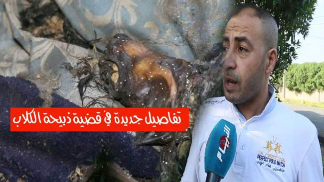 تفاصيل جديدة في قضية ذبيحة الكلاب و توزيعها على المجازر بمنطقة الشلالات بالمحمدية