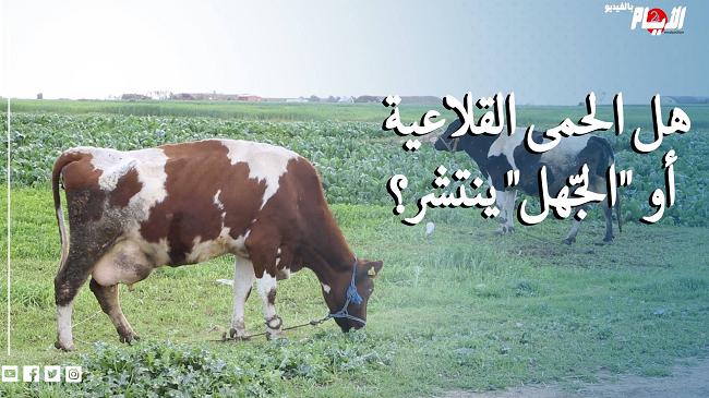 """إعدام أبقار وأغنام بشكل جماعي يثير الشكوك.. هل الحمى القلاعية أو """"الجّهل"""" ينتشر؟"""