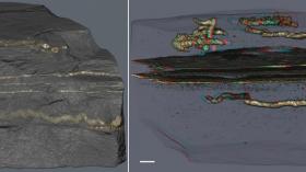 عالم مغربي يكتشف أقدم كائن تحرّك على كوكب الأرض