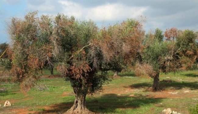 المغرب يقرر منع استيراد بعض أغراس النباتات والفاكهة بعد هذه التطورات
