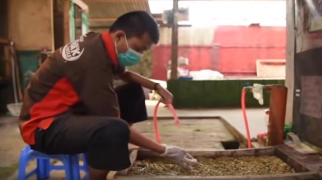 شاهد..القهوة الأغلى عالميًا تُصنع من فضلات القطط