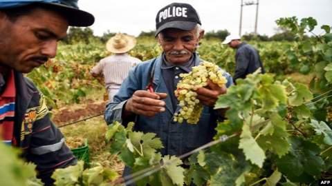 من بينها الزراعة.. هذه أسباب تراجع الاقتصاد المغربي سنة 2019