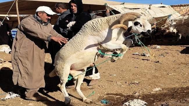 ثقافة استهلاك وخروف للتباهي..هكذا أصبح المغاربة يقضون عيد الأضحى