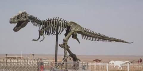 المغرب يتحول سوقا دولية لبيع بقايا الديناصورات