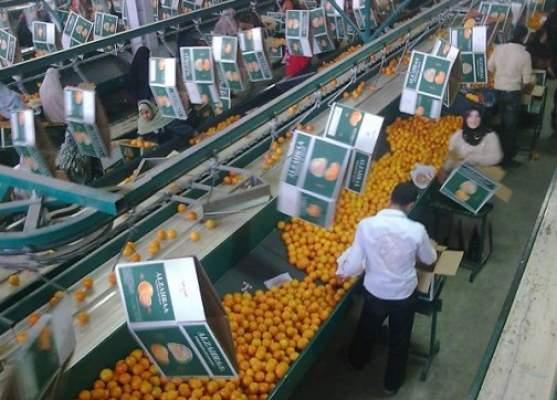 لوبيات أوربية تعلن الحرب على المنتجات الزراعية المغربية
