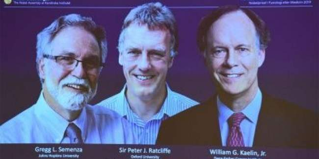 أمريكيان وبريطاني يظفرون بجائزة نوبل للطب لسنة 2019